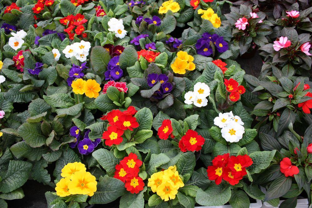 Frühlingserwachen inder Gärtnerei