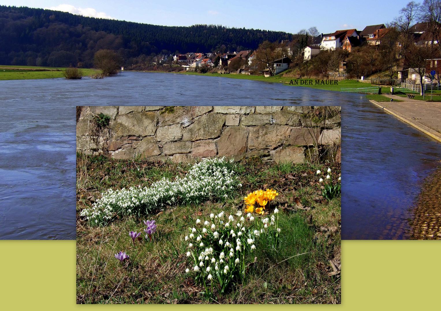 -Frühlingserwachen nach dem Hochwasser-