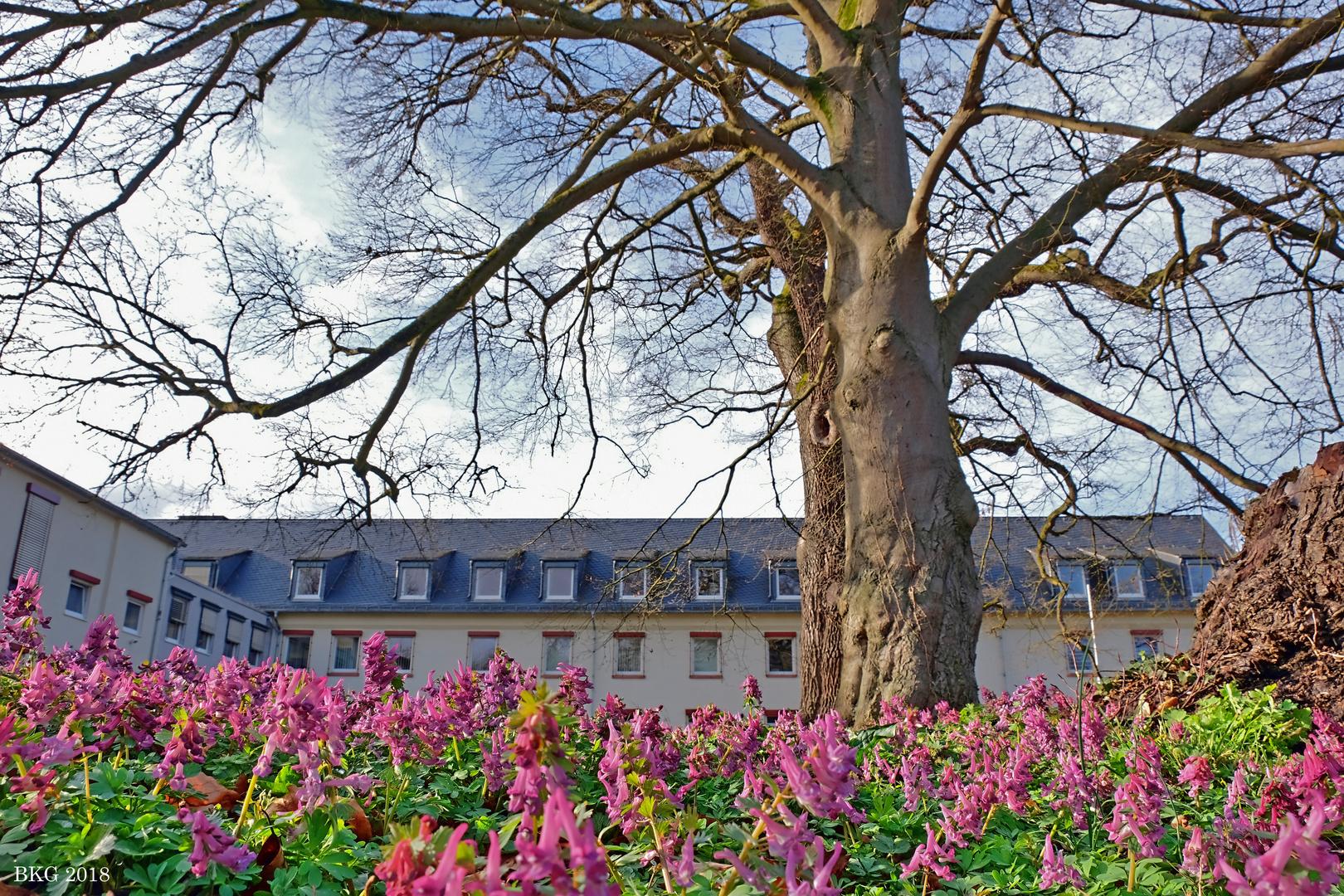 Frühlingserwachen Schloss Dehrn