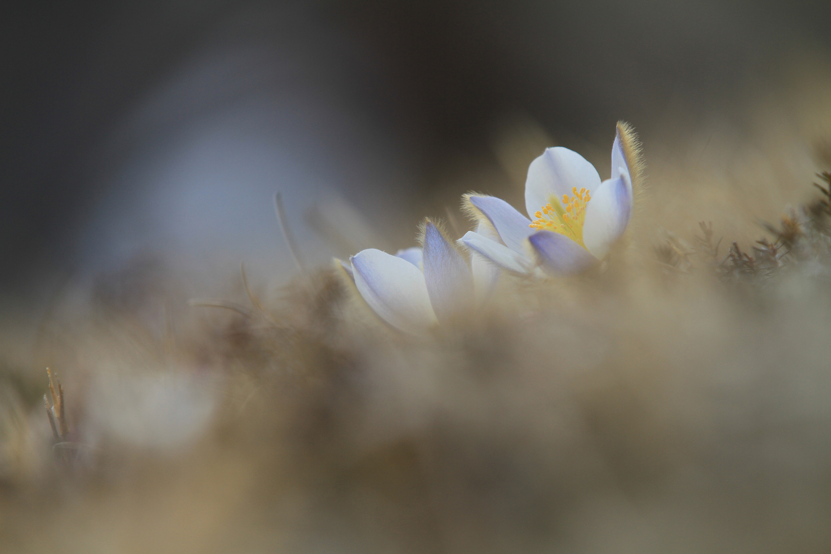 Frühlingsewachen