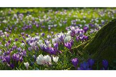 - Frühlingsfarbe -