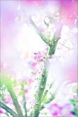 Frühlingsfarben 2011