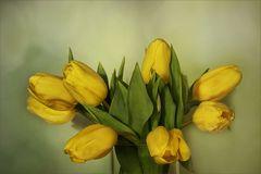 Frühlingsfarben....