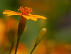 ~ Frühlingsfarben ~