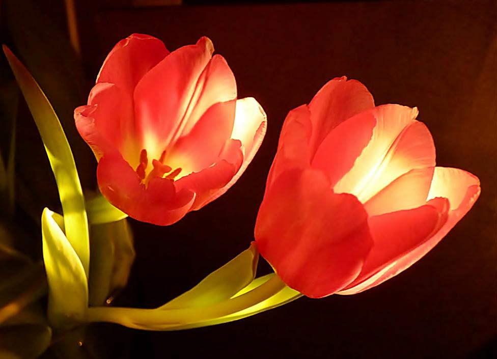 Frühlingsfarben.