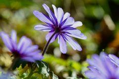 - Frühlingsfarben -