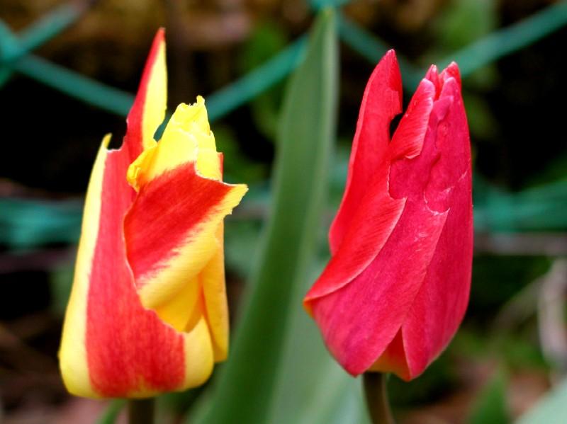 +++Frühlingsfarben+++