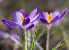 Frühlingsfarben  I