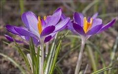 Frühlingsfarben II