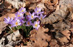 Frühlingsfarbtupfer