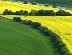 Frühlingsfelder... schwungvoll komponiert... ;-))