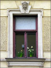 Frühlingsfenster
