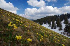 Frühlingsfreuden am Chasseral