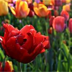 Frühlingsgedanken...