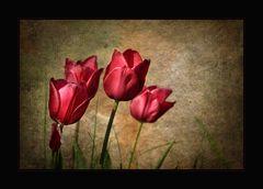 Frühlingsgedanken