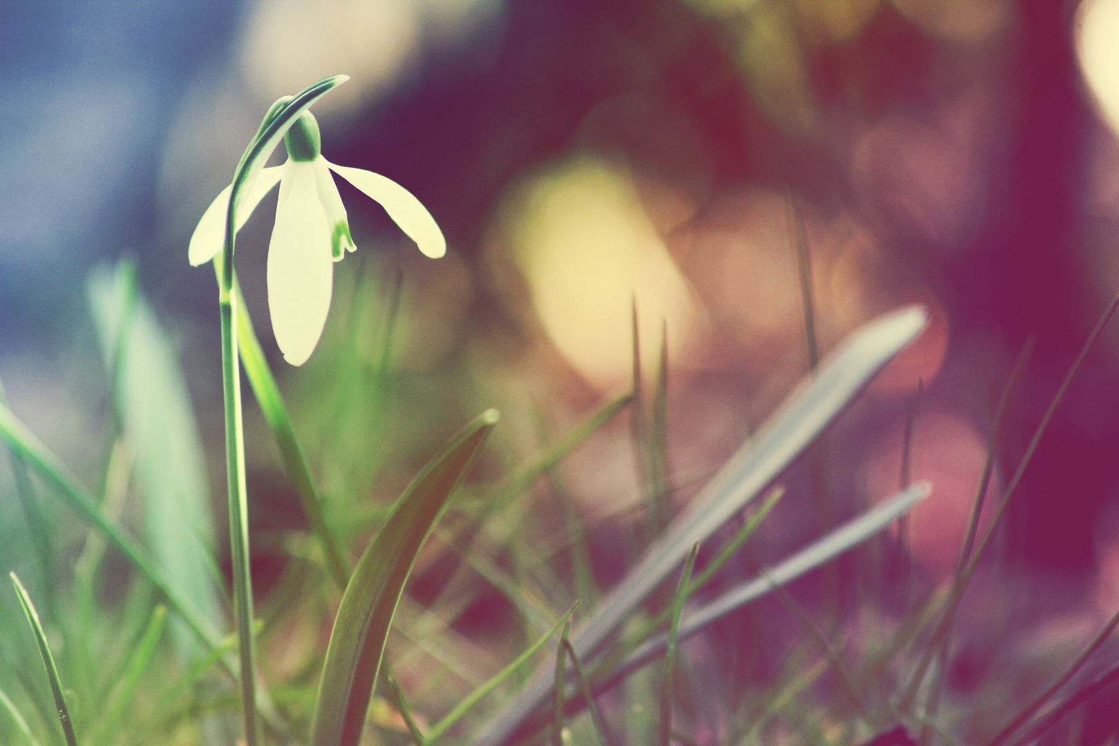 Frühlingsgeflüster