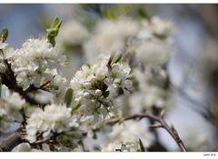 Frühlingsgefühl...