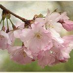 - Frühlingsgefühle -