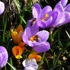 Frühlingsgefühle bei den Brummern