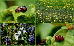 Frühlingsgefühle ;-)
