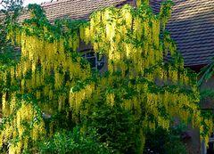 Frühlingsgefühle muss da sogar das 96 Jahre alte Dach bekommen***