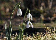 Frühlingsgeläut