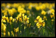 Frühlingsglaube