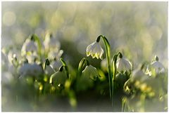 Frühlingsglück