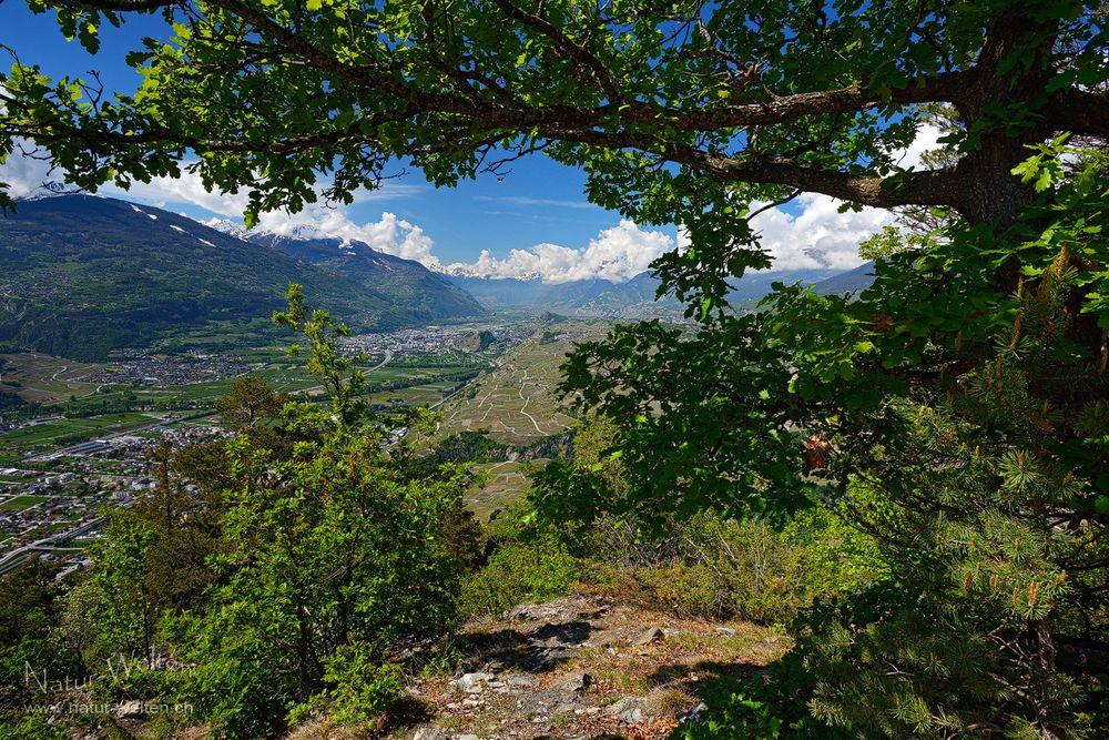 Frühlingsgrün im Wallis