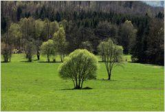 Frühlingsgrünes Wiesental... - (mit Diskussion zur Komposition)