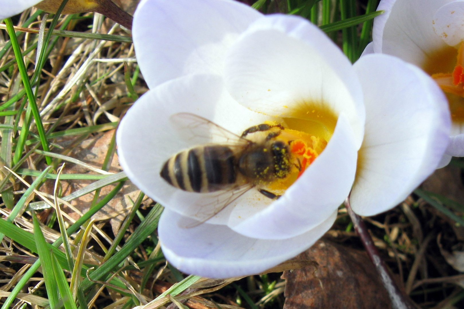 Frühlingsgrüße ......... (2)