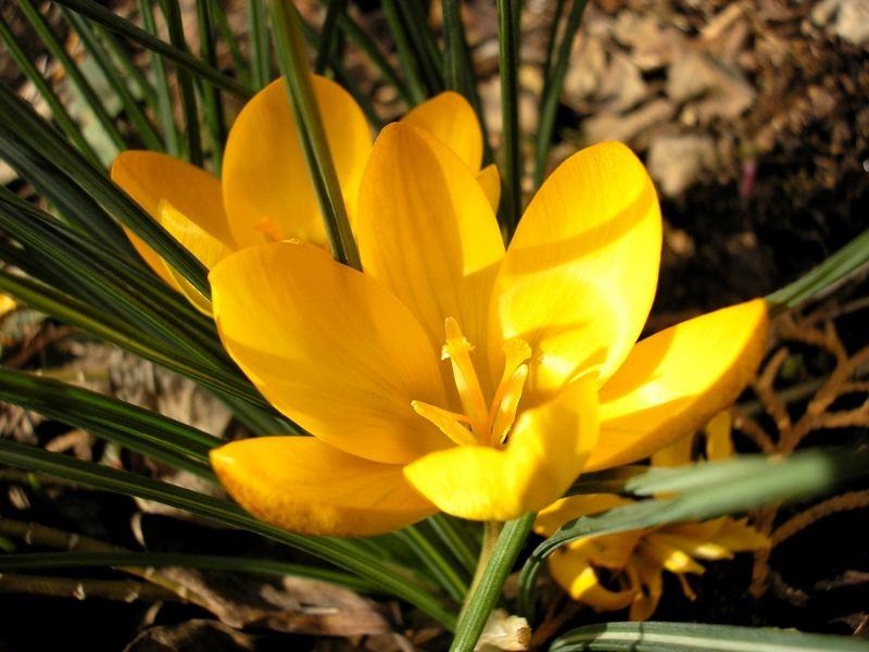 Frühlingsgrüße an alle fc'ler