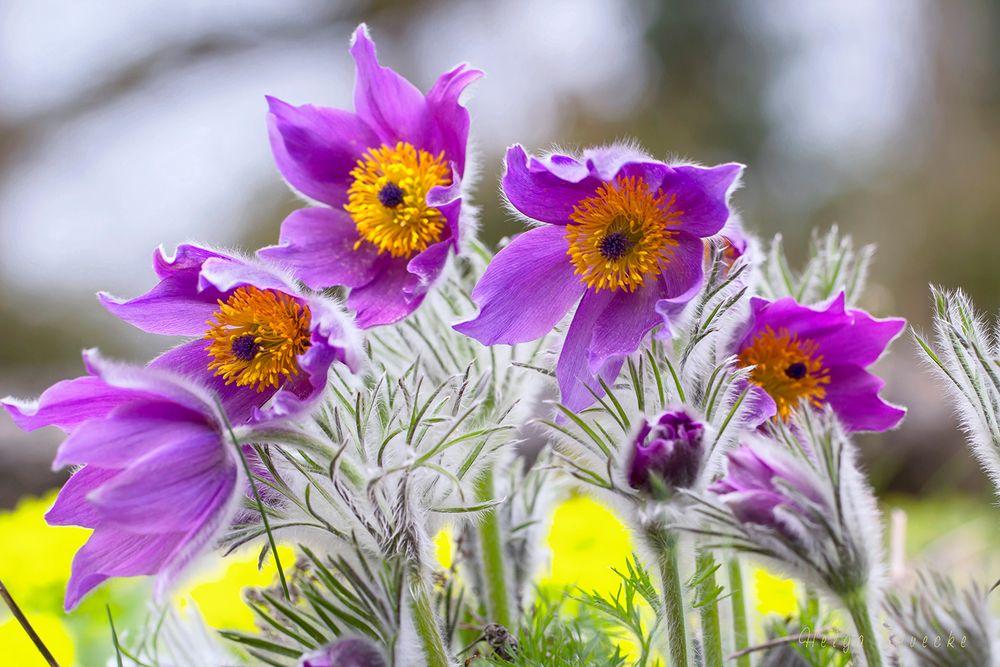 Frühlingsgrüße aus dem Erdreich ;-)