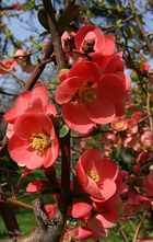 Frühlingsgrüße aus Emilia Romagna