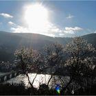 Frühlingsgrüsse aus Heidelberg ;-)