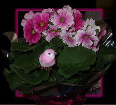 Frühlingsgrüße aus meinen Blumengeschäft