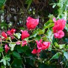 Frühlingsgrüße aus Teneriffa