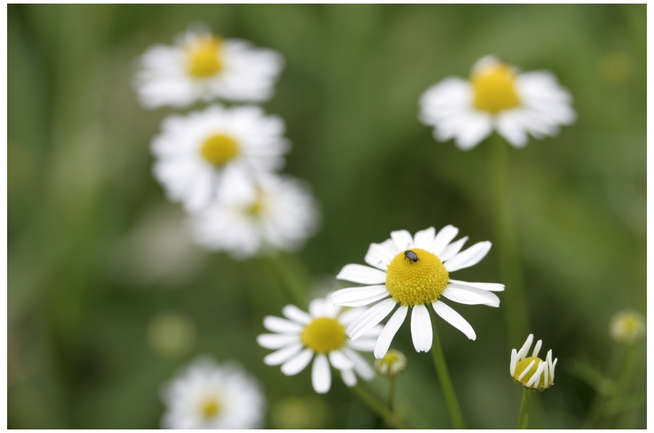 ~~~ Frühlingsgrüße ~~~
