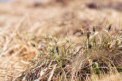 Frühlingsgrüße von der Hornisgrinde