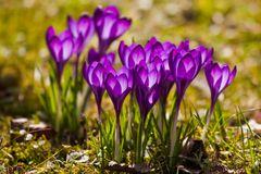 Frühlingsgrüße von mir an Euch...