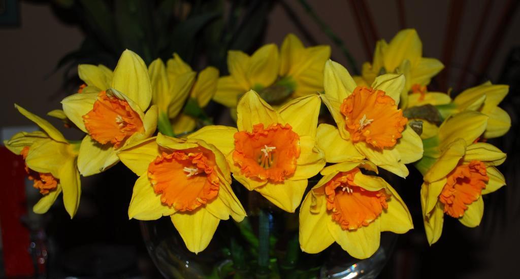 Frühlingsgruß :)