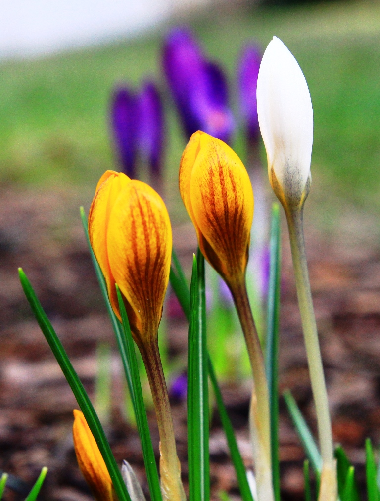 Frühlingsgruß aus Schneckenansicht
