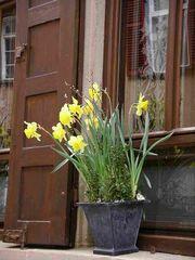 Frühlingsgruß aus Tübingen