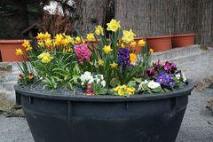 Frühlingsgruß bei diesigem Wetter aber...