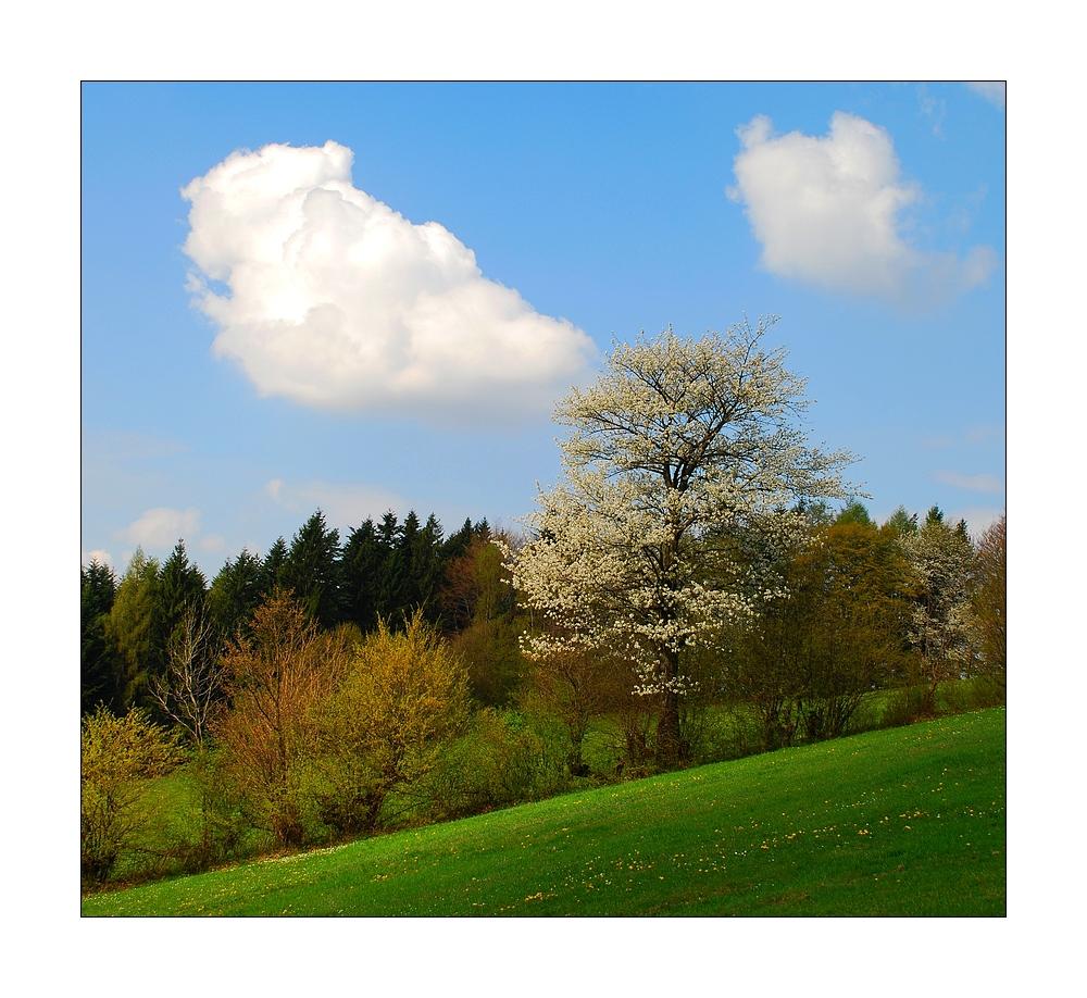 ~ Frühlingsgruß ~
