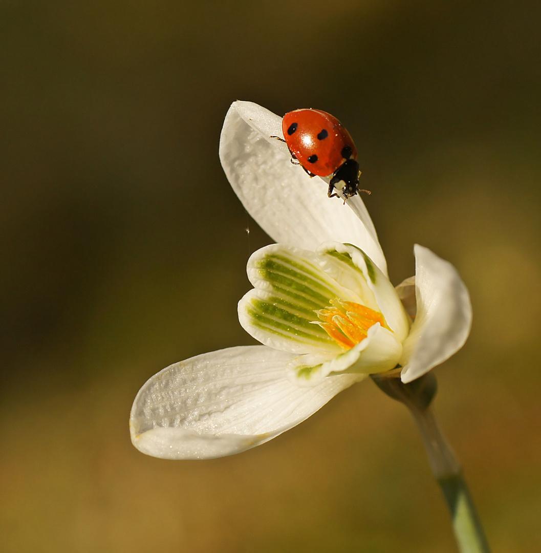 Frühlingsgruß....