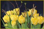 Frühlingsgruss für meine Buddies