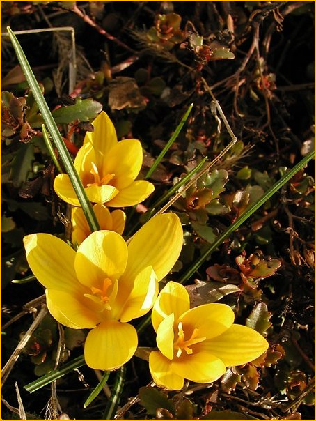 Frühlingsgruß II