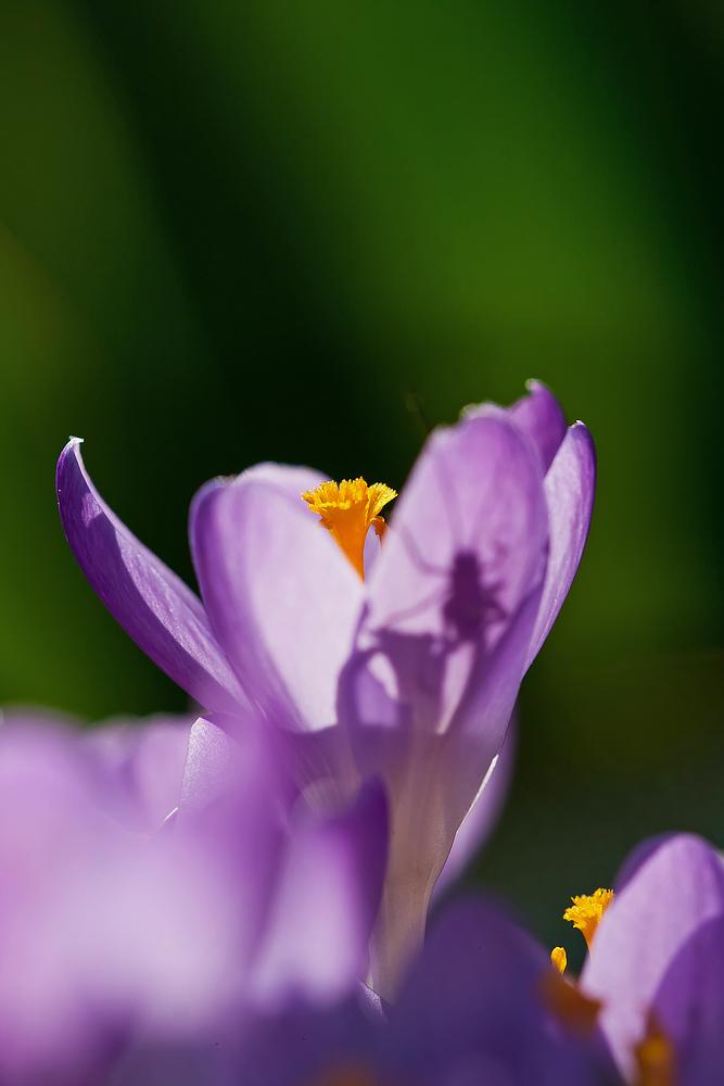 Frühlingsgruss mit Versteckspiel