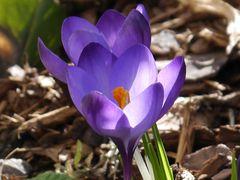Frühlingsgruß zum Sonntag